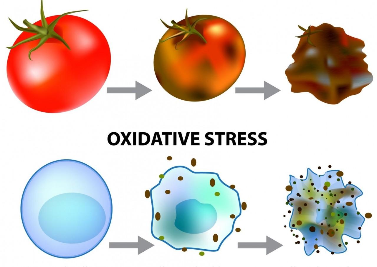 Oxidativer-Stress-JPG